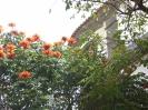 010_2015-04-07_Funchal_hoe_P1030665